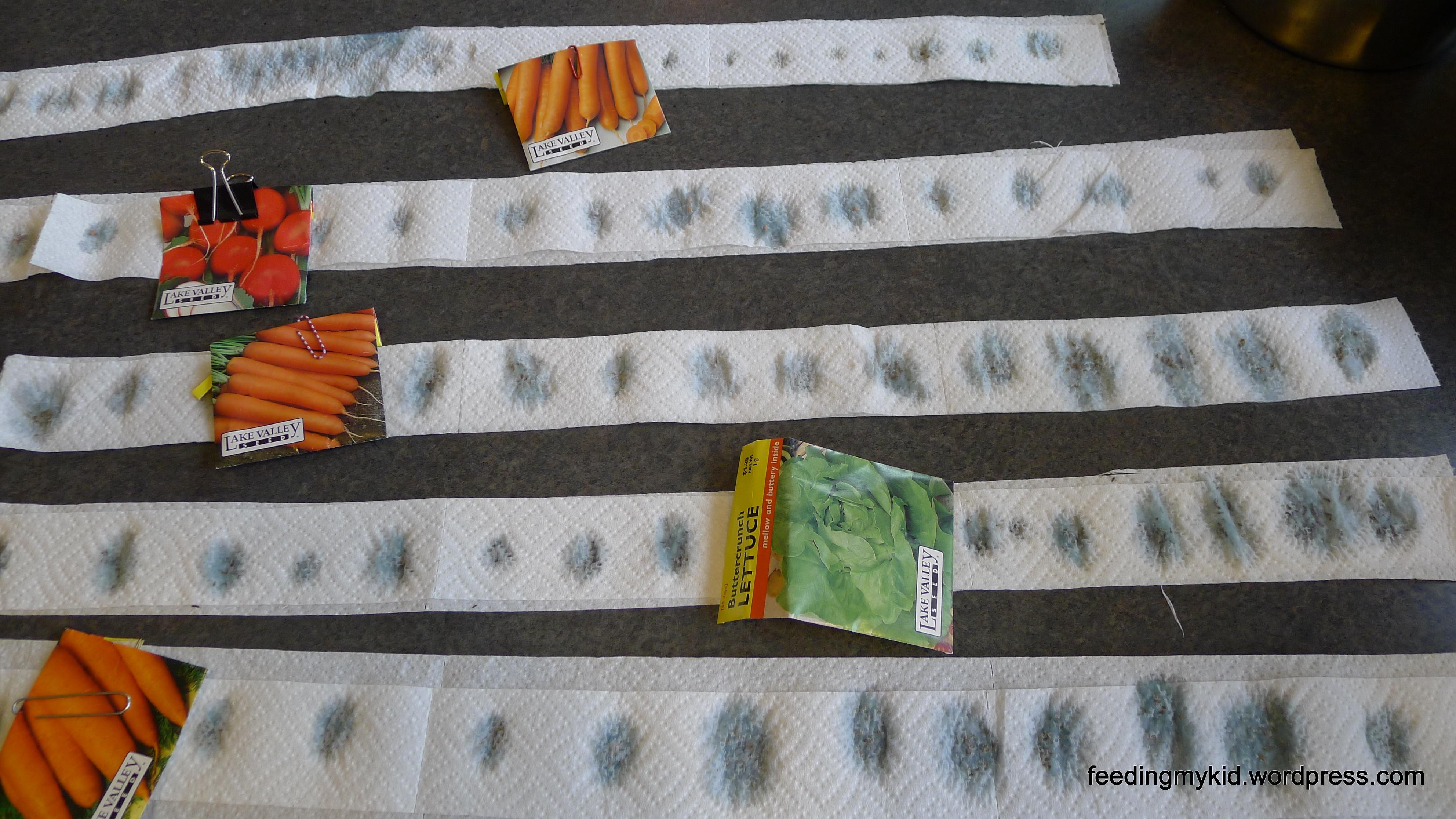 diy seed tape | feedingmykid